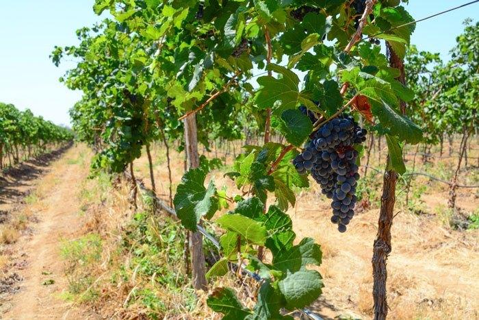 vinicolas vale do são francisco